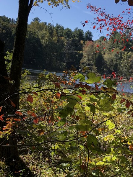 Fall lake view
