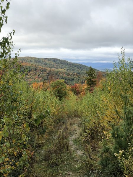View from Reed Road Trail