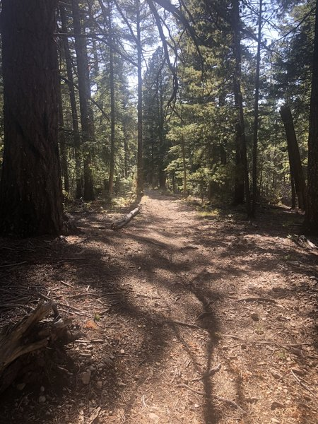 Pines Trail - North (T5688)