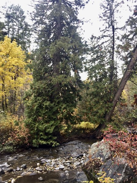 Autumn colors, Great Horned Owl, American Dipper, Pacific Wren, and some cute chickadees greeted us.