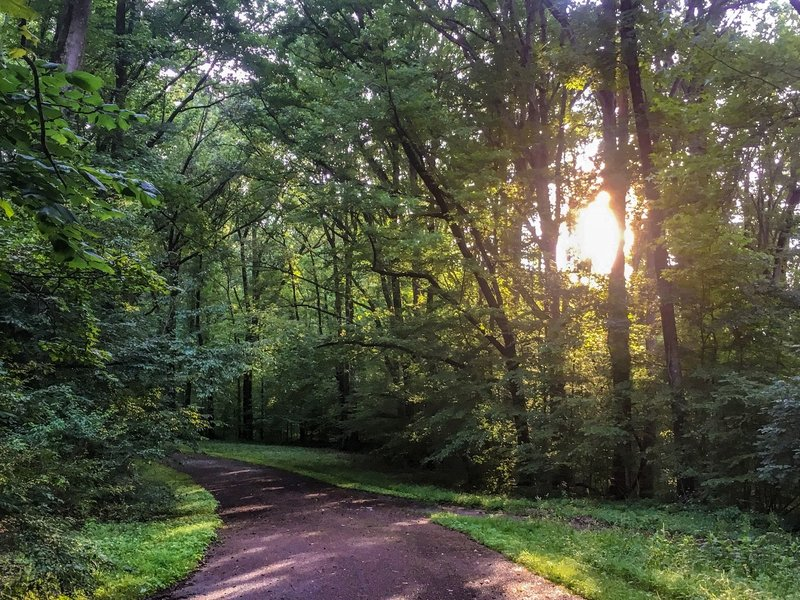 Shelby Forest Bicycle Trail in summer