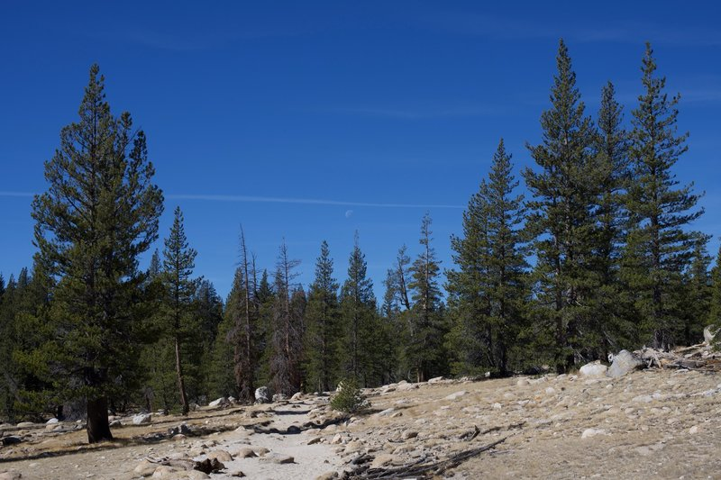The moon above the pines on the PCT between Tuolumne Meadows and Glen Aulin.
