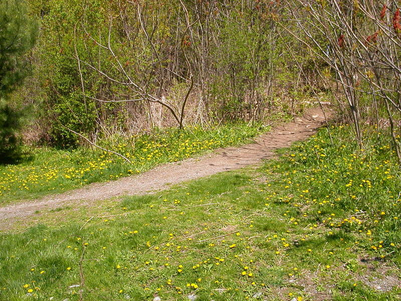The path in summer.