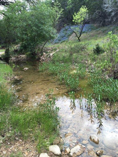 Nice little creek crossing on the trail.