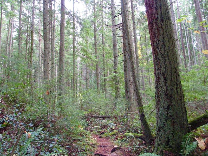 The North Loop Trail