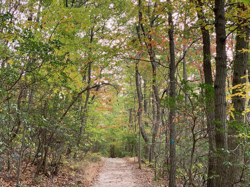 Blue Trail headed south