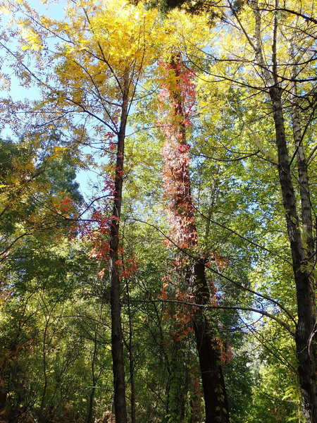 This canyon trail is a great place to see fall colors too. It truly offers a little of everything.