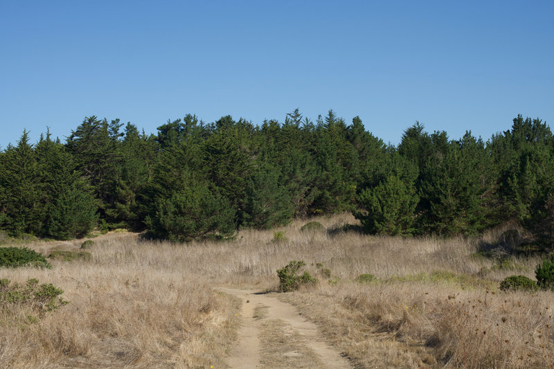 The trail is dirt on the lower portion of the trail and passes through evergreen woods.