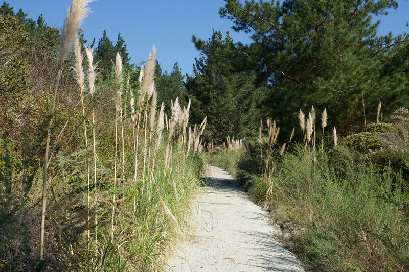 The trail turns to gravel and pampas grass grows along the trail as it reaches the turn around point.