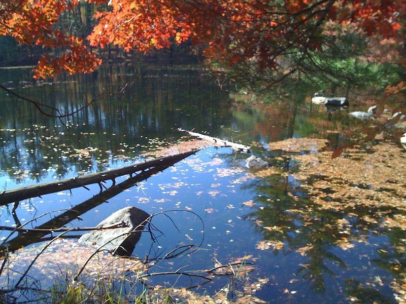 Inlet of Brackett Pond