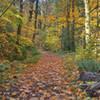 Lovely fall hike.