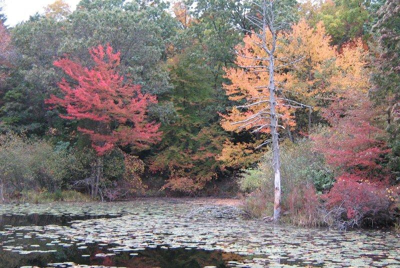Ipswich River Audubon Sanctuary