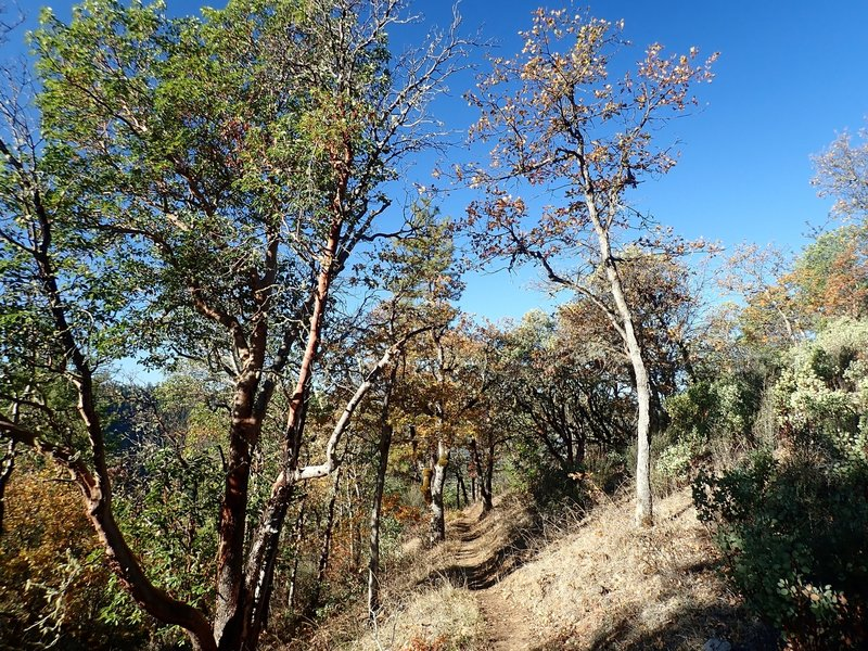 Along the Felton Memorial Trail