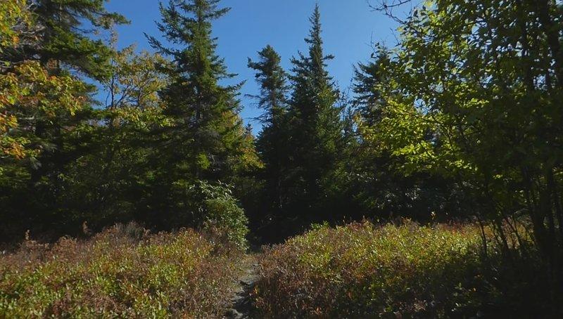 Southbound on #517 - Hidden Passage Trail Junction
