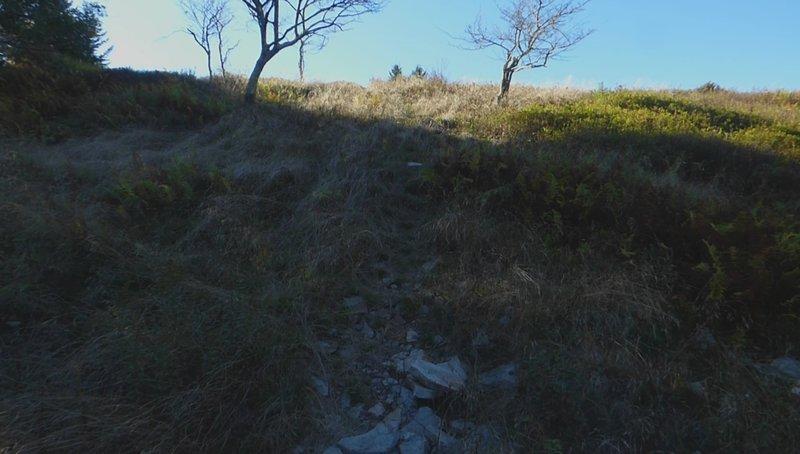Hidden Passage Trail - begin big meadow