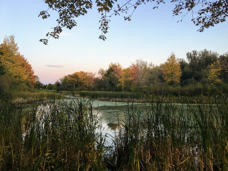 Birdsong nature walk has some nice pond-side spots for viewing the fall colors.
