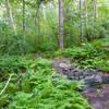 Beaver Brook trail.