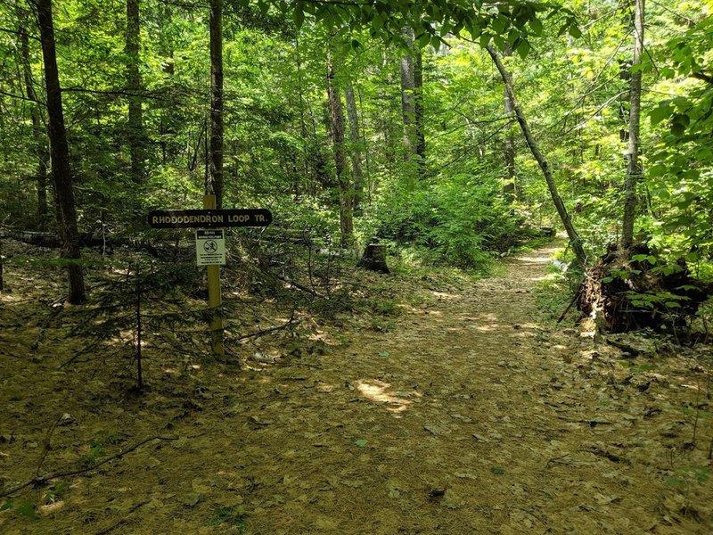 Nice easy flat walking path