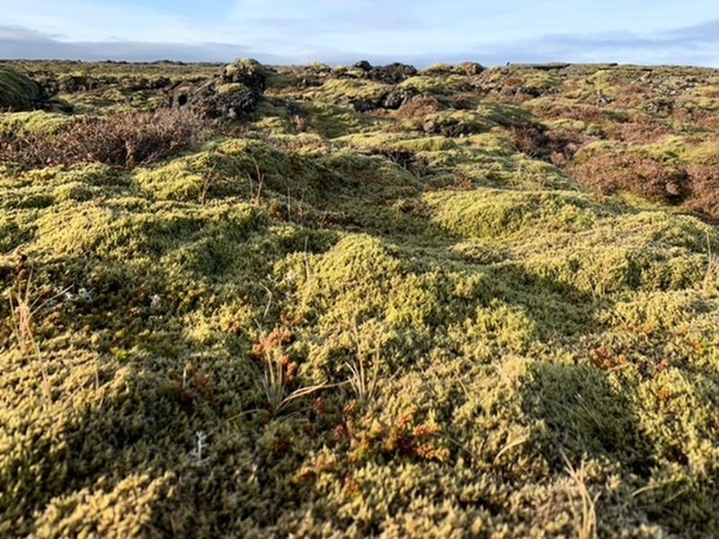 Hiking over moss on the lava field.