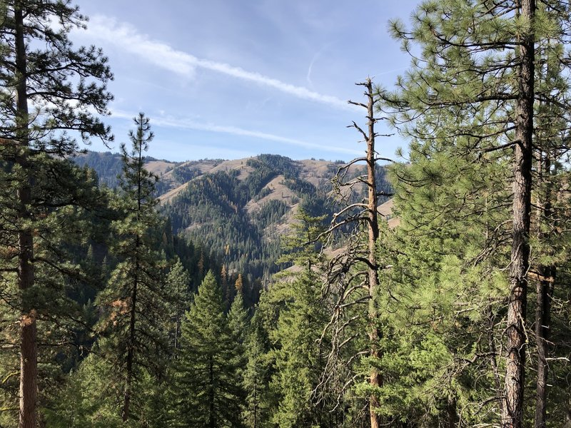 View to the west and the South Fork Umatilla River Canyon, Bobsled Ridge.