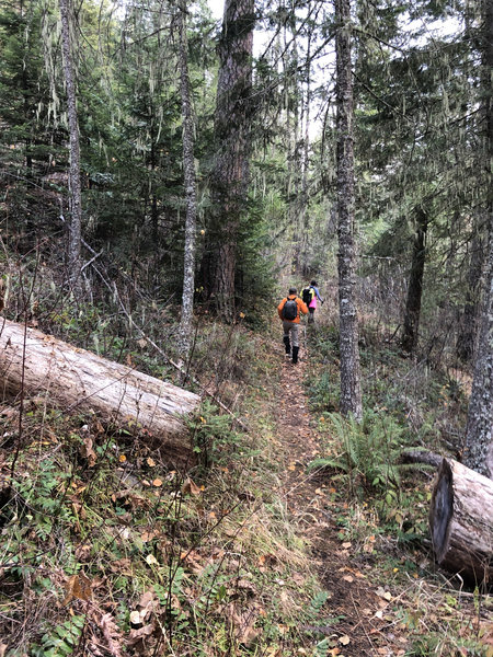 Fall hiking conditions on the Buck Creek Trail