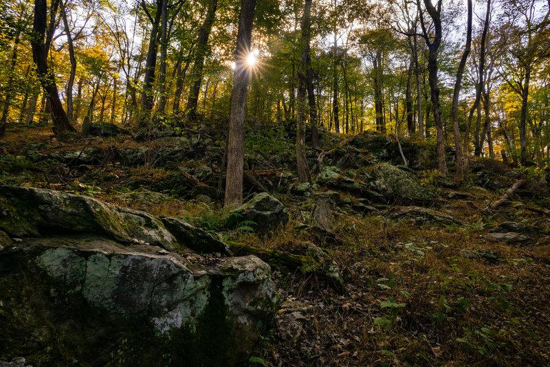 Random Scenery in Cunningham Falls State Park