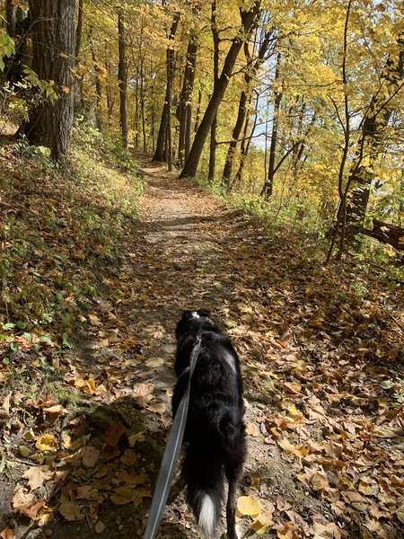 Leaf peeping with my pup at Backbone State Park