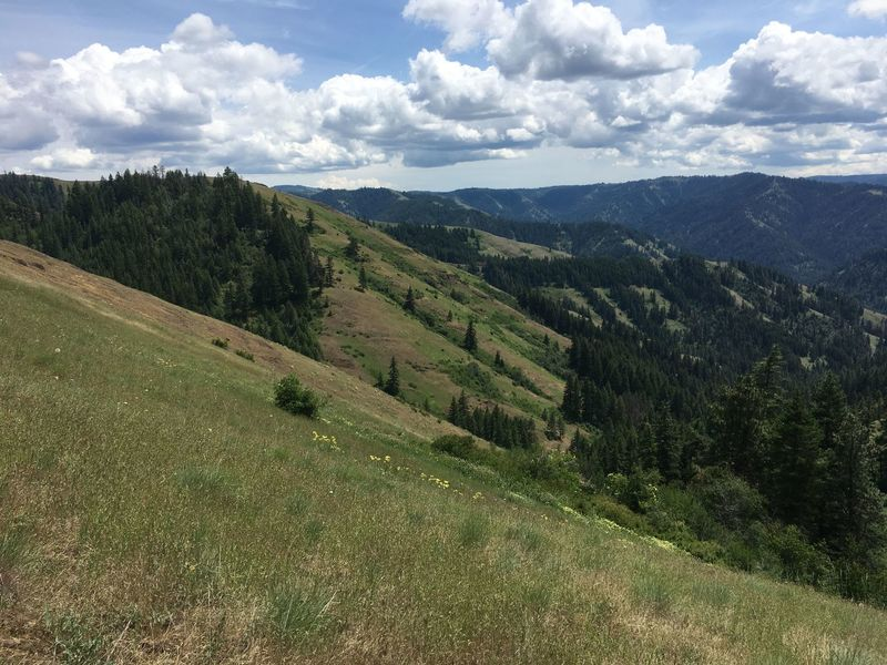 Looking east into the Lick Creek drainage