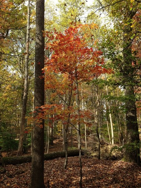 Fall colors in Sugarloaf Mountain Natural Area