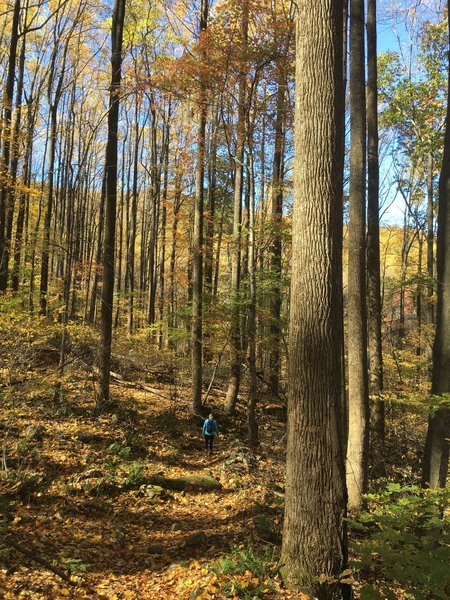 Beautiful fall hike on a steep trail.