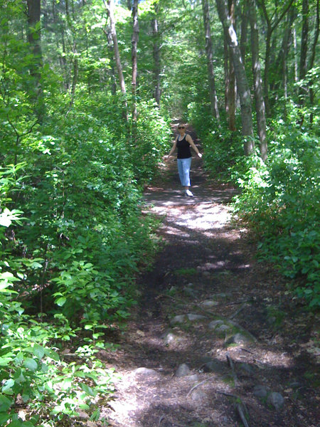 """Hiking in Wompatuck"""" by Matthew Simoneau (https://tinyurl.com/wal49bv), Flickr licensed under CC BY-SA 2.0 (https://creativecommons.org/licenses/by-sa/2.0/)."""