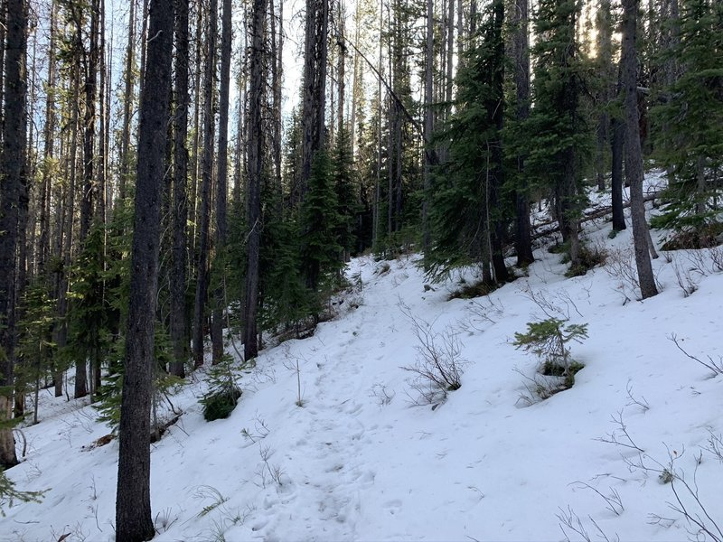 Snow-covered trail.