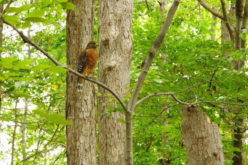 Bird at Ramsey
