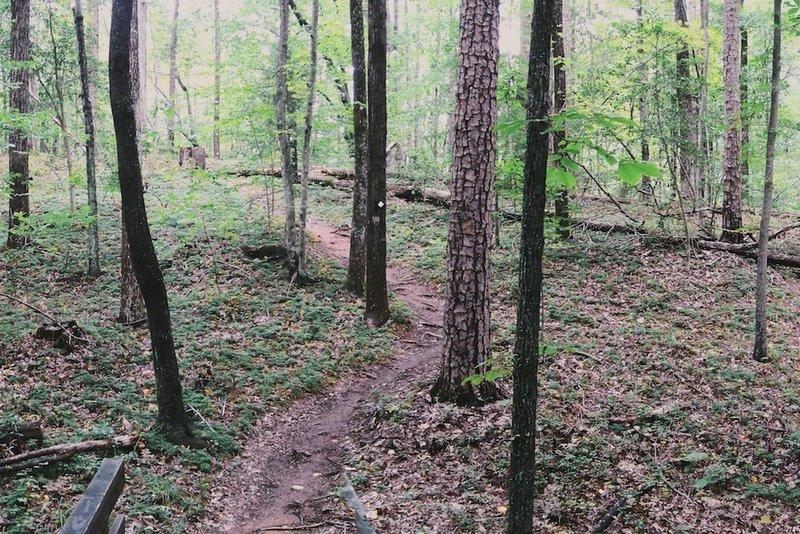 Monbo trail