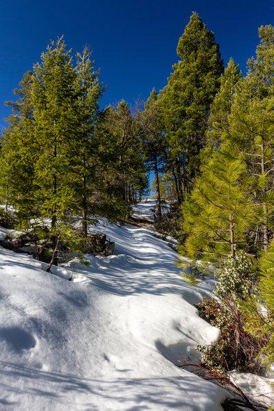 Snow on Halls Ranch Trail