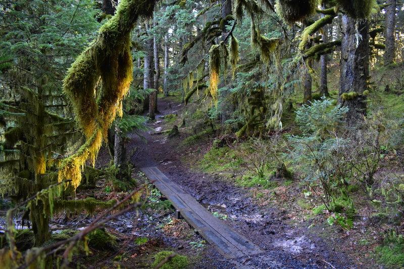 Boardwalk on Parkside Trail.