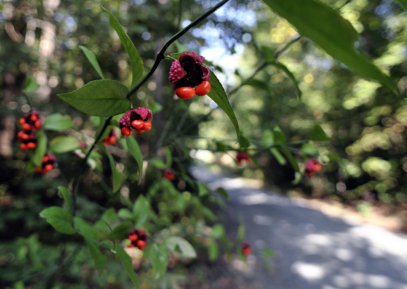 red berry trail