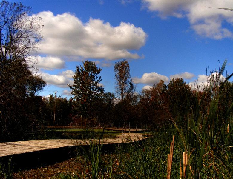 Wetlands Boardwalk