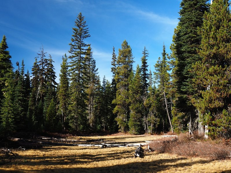 An open meadow along the trail just west of Summit Lake