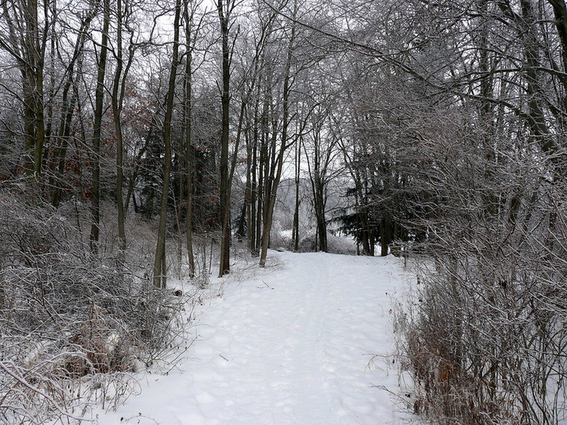 """Path at Pickerel Lake"""" by John Winkelman (https://tinyurl.com/tqe8en4), Flickr licensed under CC BY 2.0 (https://creativecommons.org/licenses/by/2.0/)"""