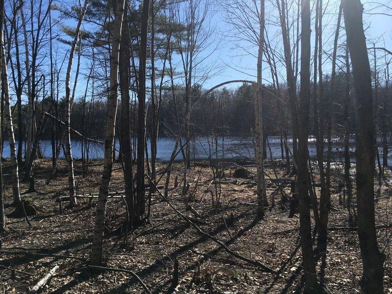 Beaver Pond on Long Loop