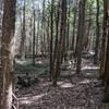 Savage Hill Abandoned Settlement