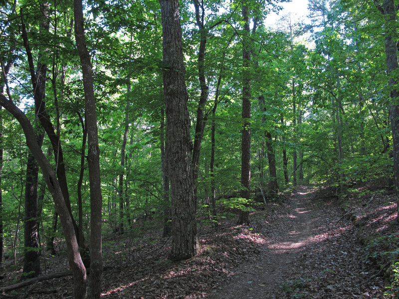 on Supertree trail