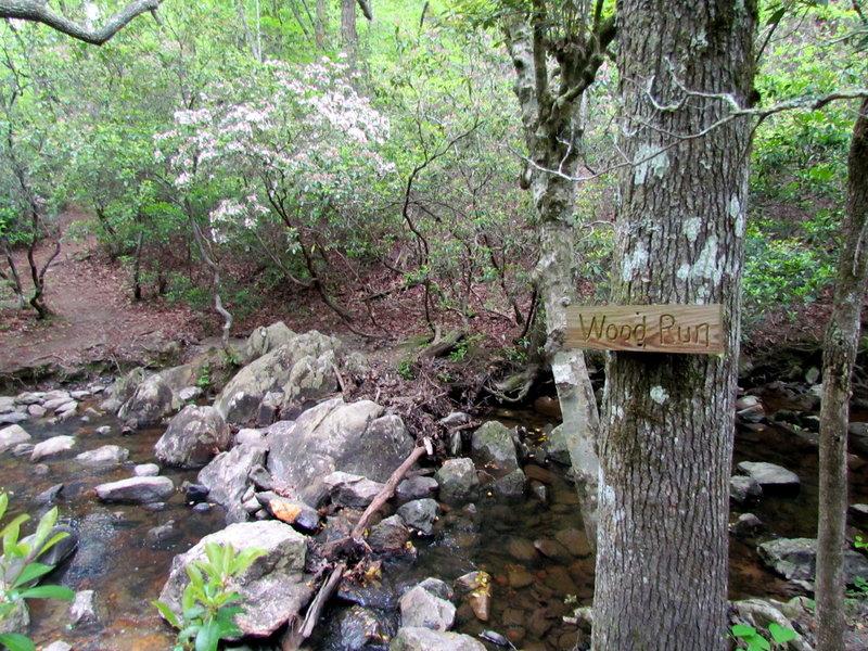 Wood Run Uwaharrie Trail Uwahrrie Nat Forest NC Uwaharrie Trail Uwahrrie Nat Forest NC