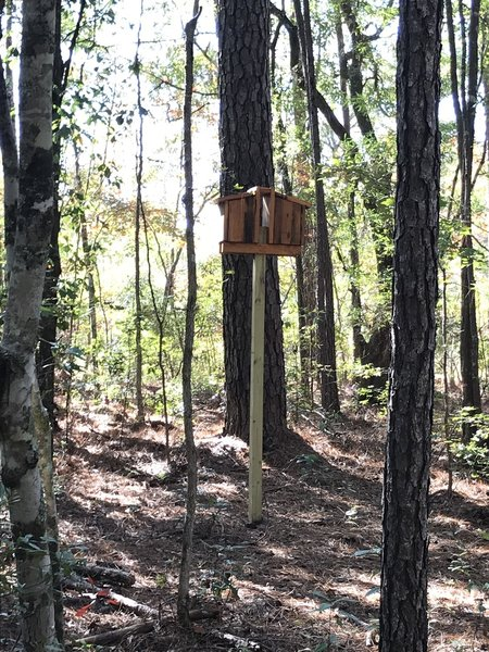 Some bird houses are more hidden than this one among the trees along the trail for bats, wood ducks among other winged animals.