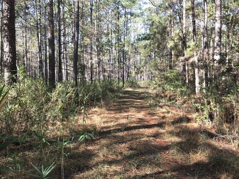 Old Loop Trail, is fairly easy to walk but not everyone will find it as exciting as River Bluff Trail. This trail is more for bird watchers and getting away from the busier part of the State Park.