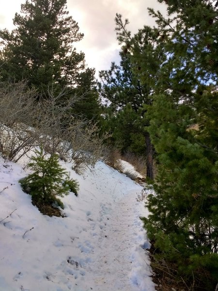 There's a tiny bit of forest right before you come upon the Mt. Galbraith Loop intersection.