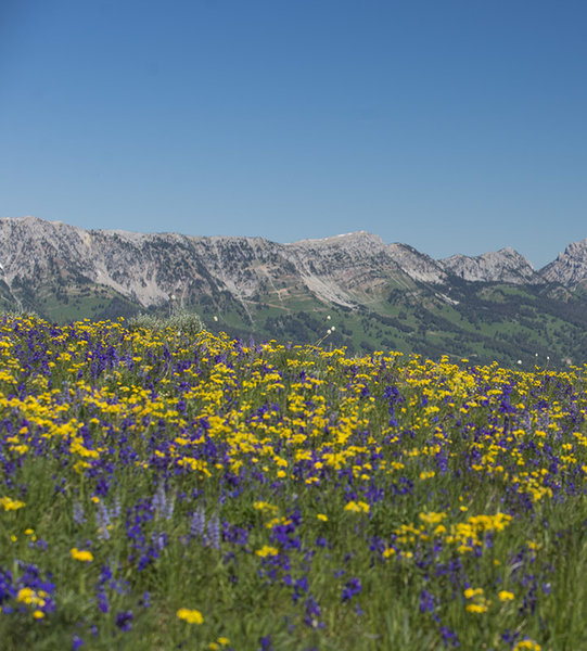 Views and wildflowers abound during springtime on the divide.
