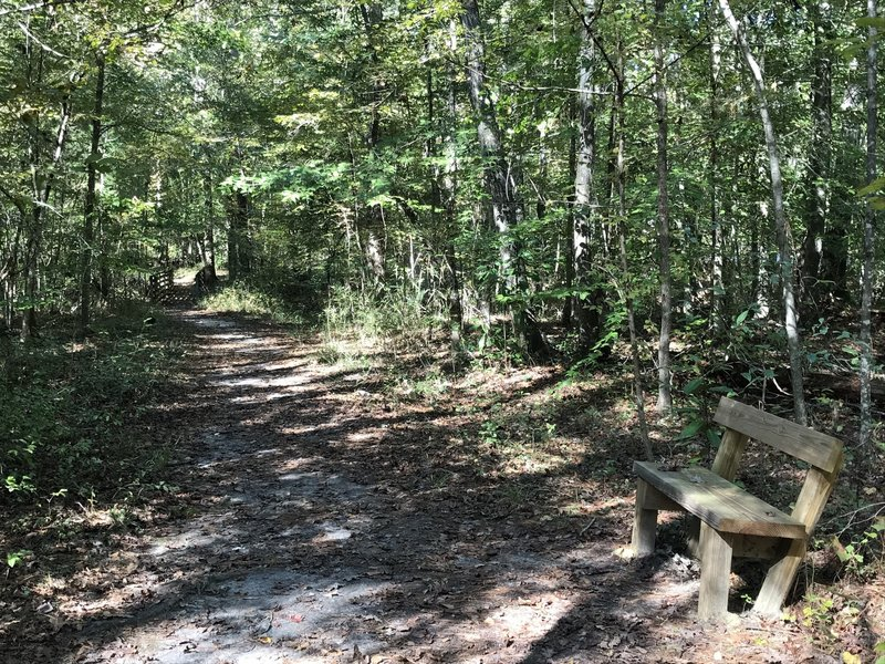 One of three benches along trail, the only little foot bridge over a ravine ahead, just right is road with thin buffer of trees and for the most part the trail is like this except by the river a few more roots to watch for.
