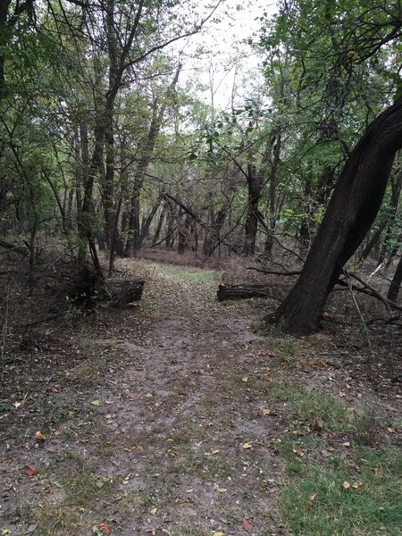 This path is in the woods and not very sandy.
